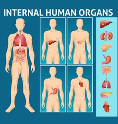 Cartoon human body internal parts concept vector