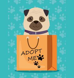 dog in paper bag pet friendly vector image