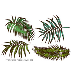 Set hand drawn colored tropical palm vector