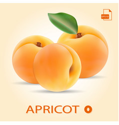Set of three fresh apricots with leaf vector