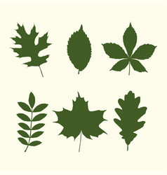Set of tree leaves shapes vector