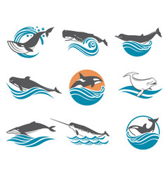 Various whales set vector