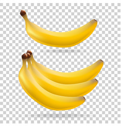 banana on transparent background fruit vector image