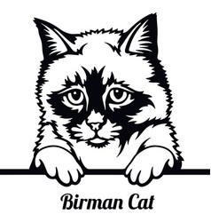 birman cat - cat breed cat breed head isolated vector image