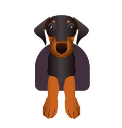 doberman puppy vector image