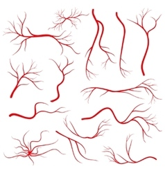 Human eye veins vessel blood arteries isolated vector image