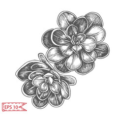 Sketch - card with succulent vector