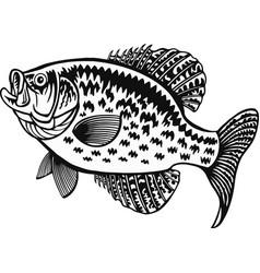white crappie fish - freshwater sport fish vector image