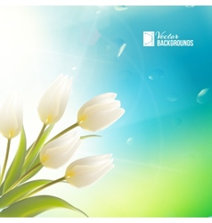 Spring card with white tulips vector image
