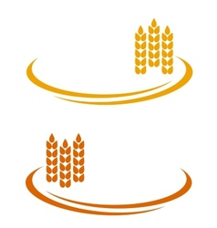 wheat ears with decorative line vector image vector image
