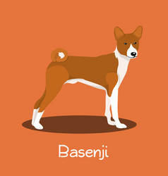 an depicting a cute basenji dog cartoon vector image vector image