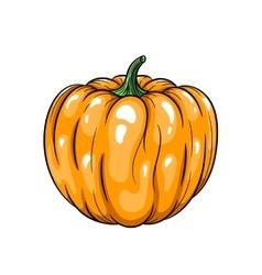 pumpkin on white background vector image