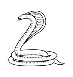 Poisonous Cobra serpent vector image