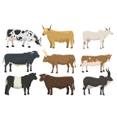set of bulls and cows farm animal cattle mammal vector image vector image