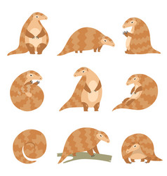 cute pangolin animal in various poses set rare vector image