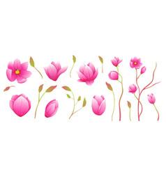 magnolia flowers fine art isolated clip art vector image