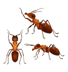 set ants with two antennas and six legs in vector image
