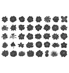 Succulent plant set from vector