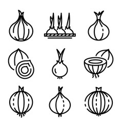 Onion icons set outline style vector