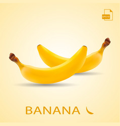 Set of two fresh bananas isolated on a background vector