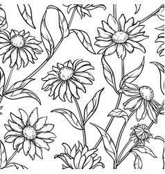Echinacea seamless pattern vector