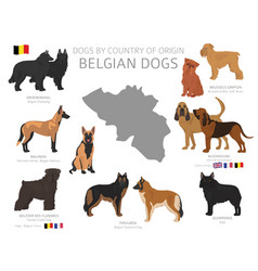 Dogs country origin belgian dog breeds vector