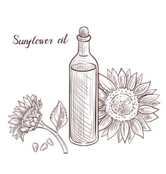 drawing sunflower oil vector image