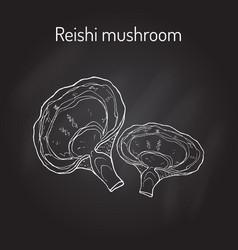 Reishi mushroom ganoderma lucidum superfood vector