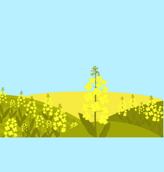 Canola flower rapeseed grows in a meadow vector