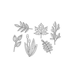 collection of hand drawn plants monochrome vector image