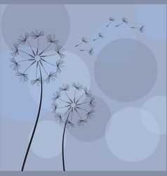dandelion with flying seeds vector image