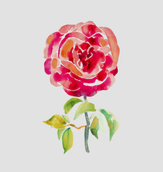 decorative hand painting of red rose vector image
