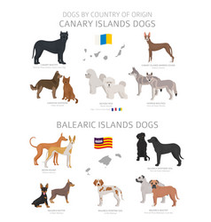 Dogs country origin canary and balearic vector