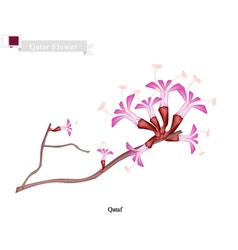Qataf Flower The National Flower of Qatar vector