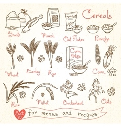 Set drawings cereals for design menus recipes vector