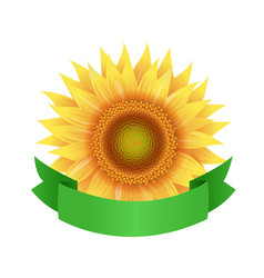 Sunflower flowers with green ribbon isolated vector