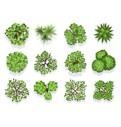 Top view tree collection - green foliage isolated vector
