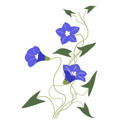 Blue petunia or alstroemeria flower in blossom vector