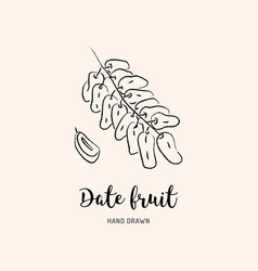 Date fruit drawing dried dates sketch dates vector