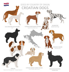 Dogs country origin croatian dog breeds vector