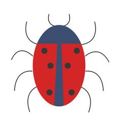 Ladybug animal isolated icon vector