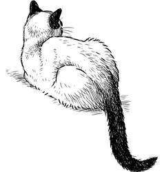 Sketch lying domestic siamese cat vector
