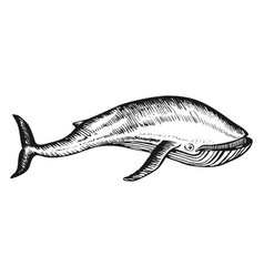 whale doodle hand drawn sketch vector image