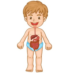 Little boy and digestive system vector image vector image