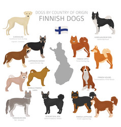 Dogs country origin finnish dog breeds vector