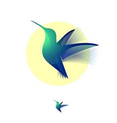 Hummingbird color transparent vector
