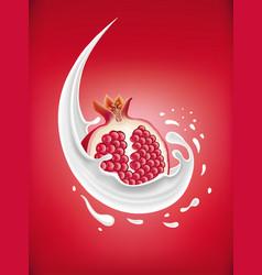 milk splash with fresh pomegranate vector image