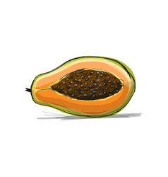 papaya sketch for your design vector image
