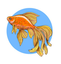 Shiny goldfish on a blue round background vector
