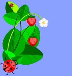 strawberry and ladybug vector image